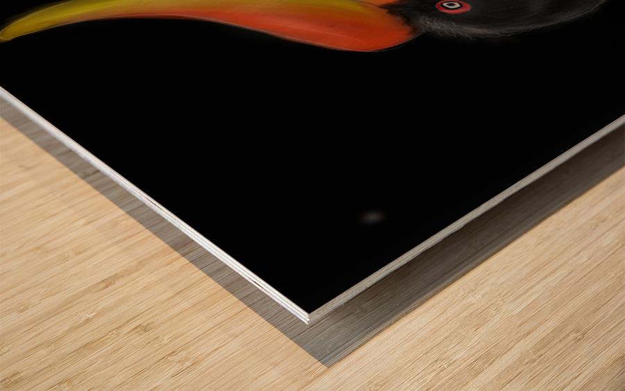 Rhinocerous Hornbill Wood print