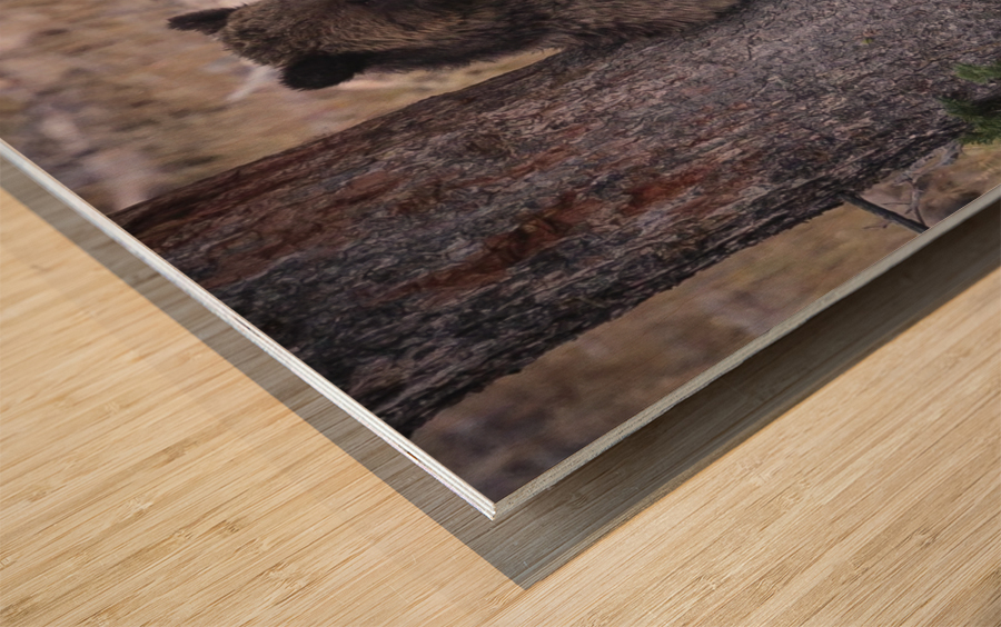_T8C3739 Modifier Wood print