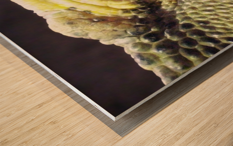 Scale Wood print