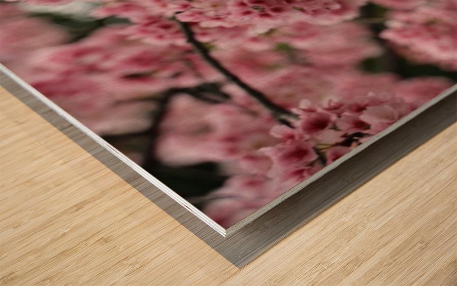 Sakura  Wood print