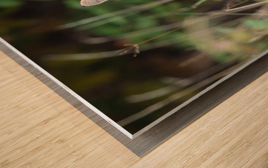 Wild Bobcat Wood print