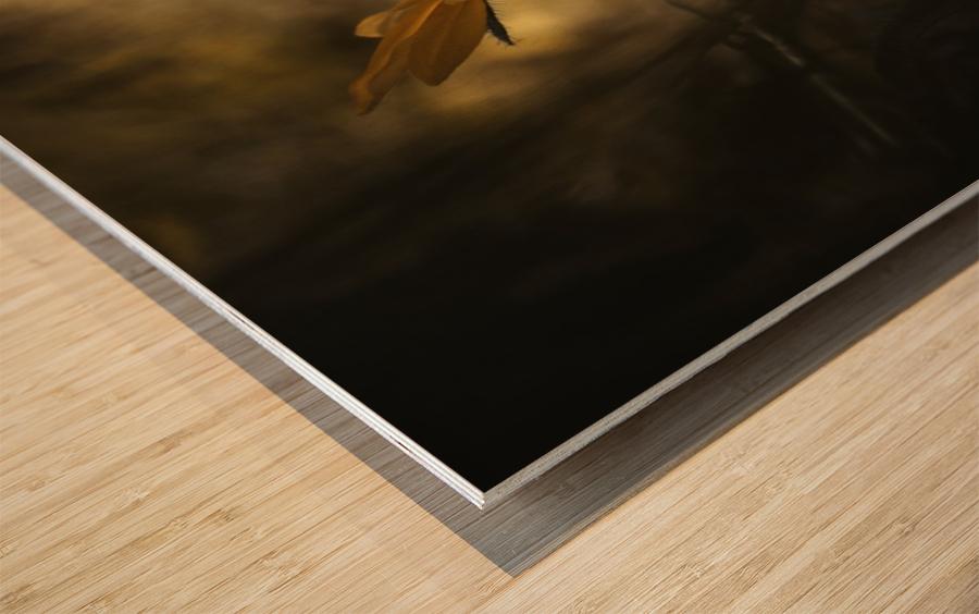 Solaris Wood print