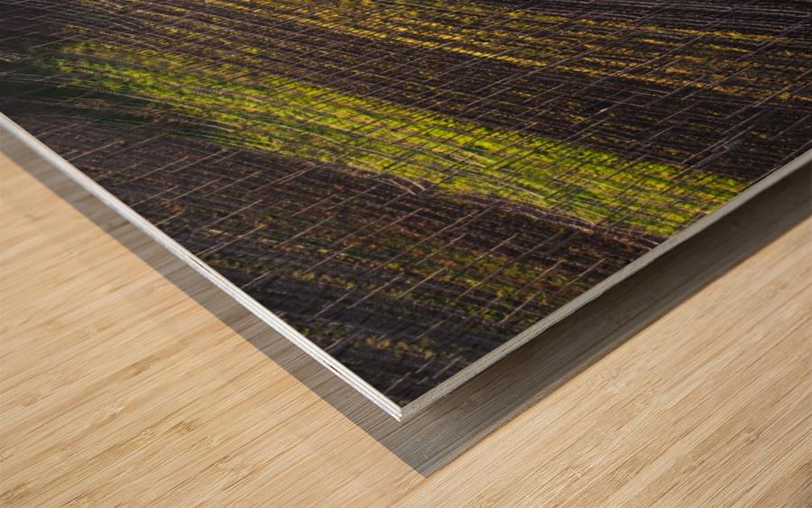 Strings of spring Wood print