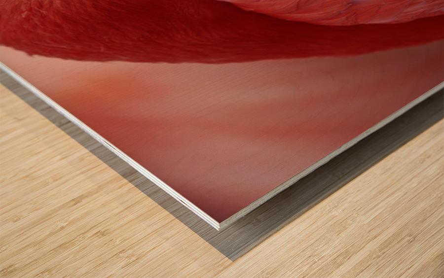 RED Wood print