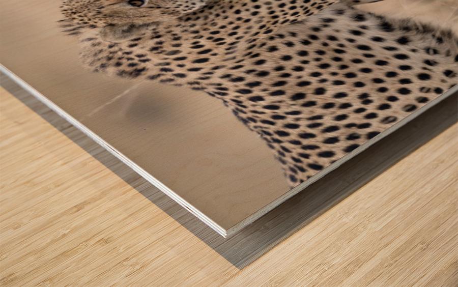 Cheetah Bro Wood print