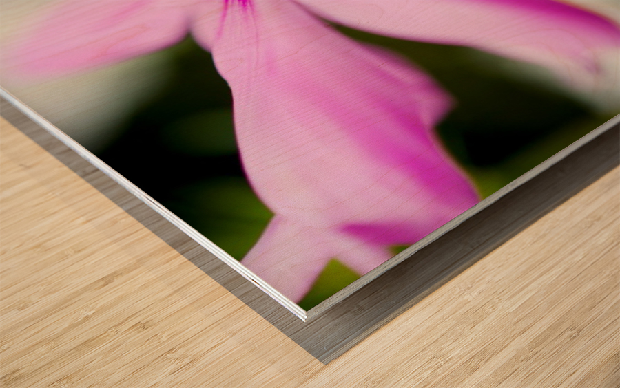 Pink and Flowing Wood print