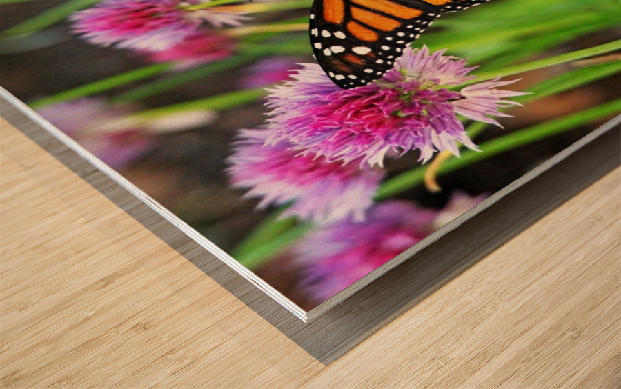 Monarch And Chives Wood print