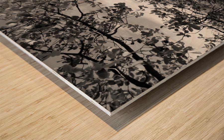 DSC01173 Wood print