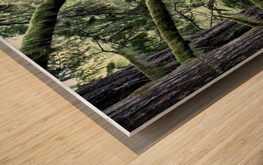 Rainforest Impression sur bois