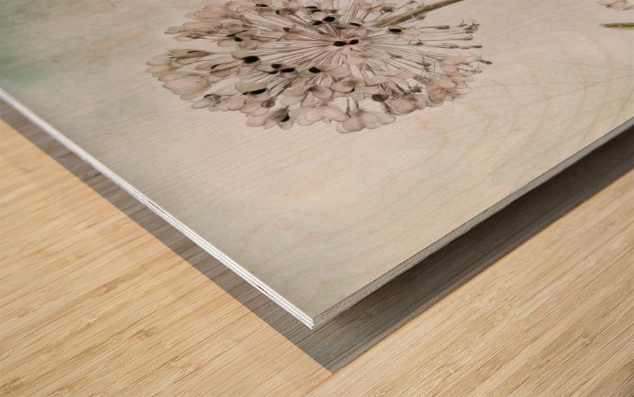 Allium Wood print