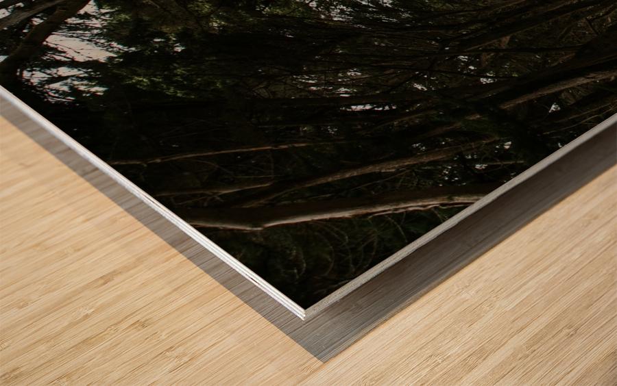 Cypress Tree Tunnel California Impression sur bois