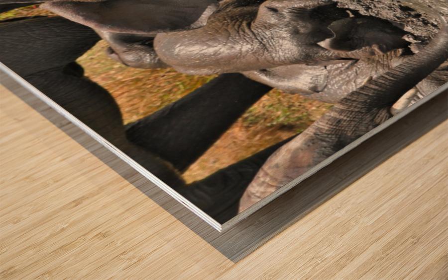 Swim break Wood print