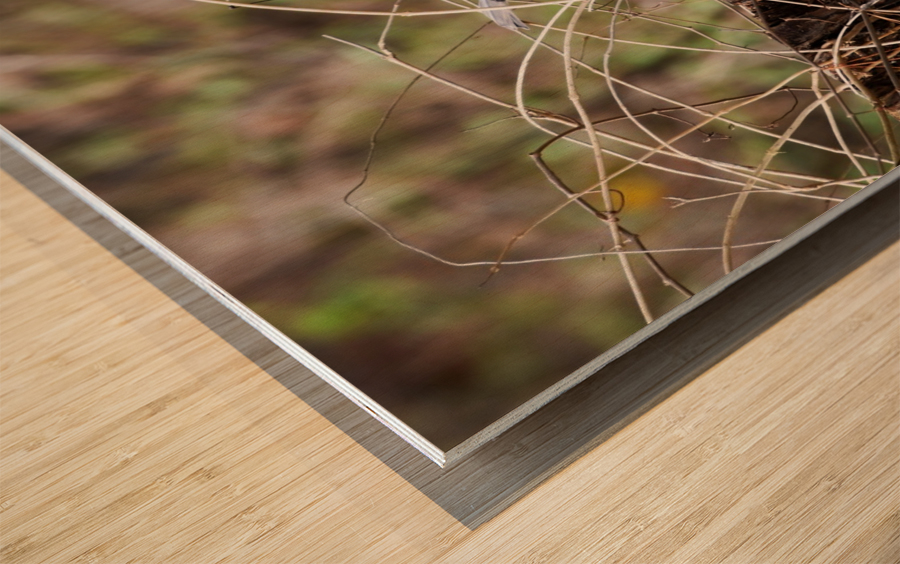 Angry Mockingbird 2 Wood print