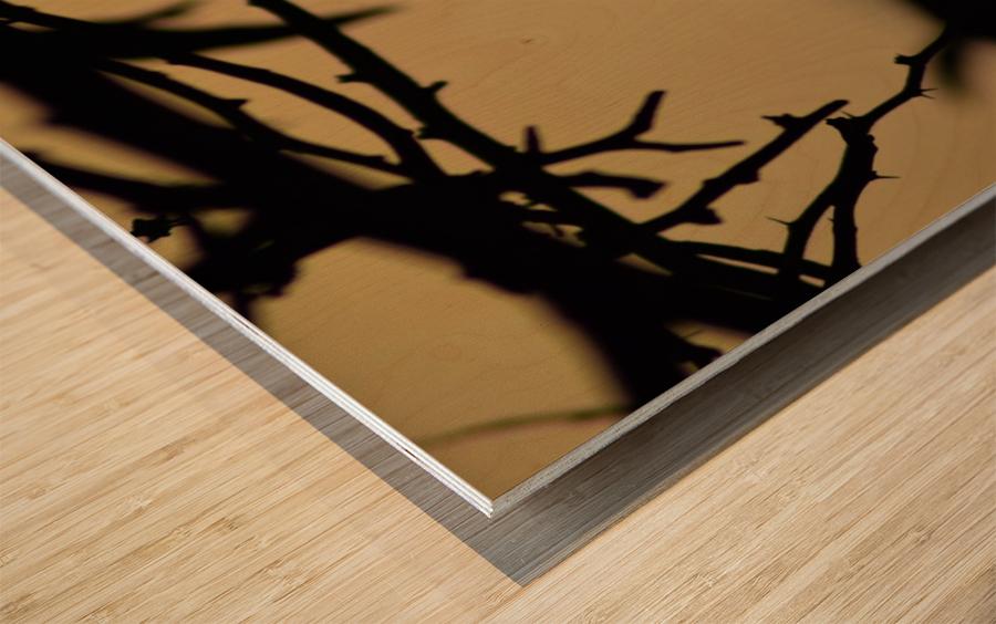 Branch Wood print