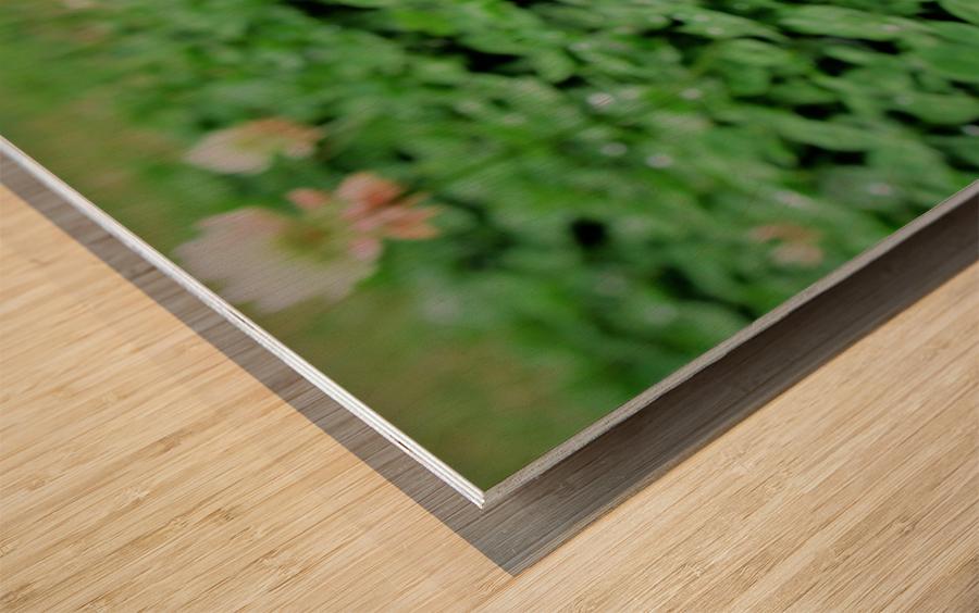 IMG_0007 Wood print