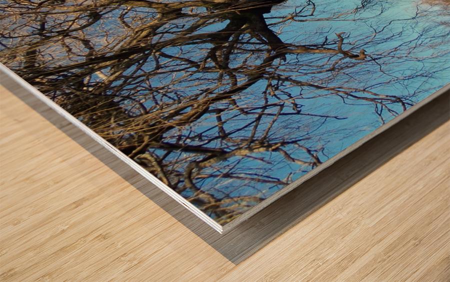 Bow Park duck pond Wood print