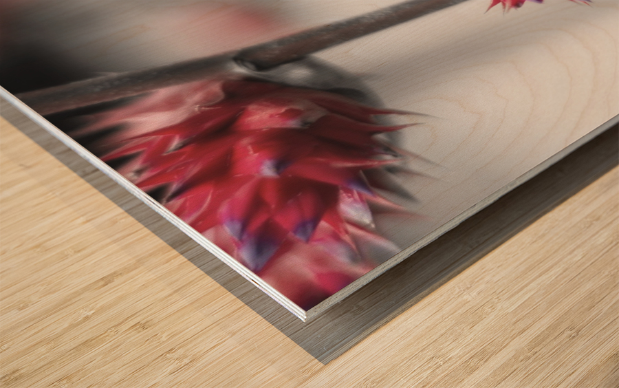 spiked flower Wood print