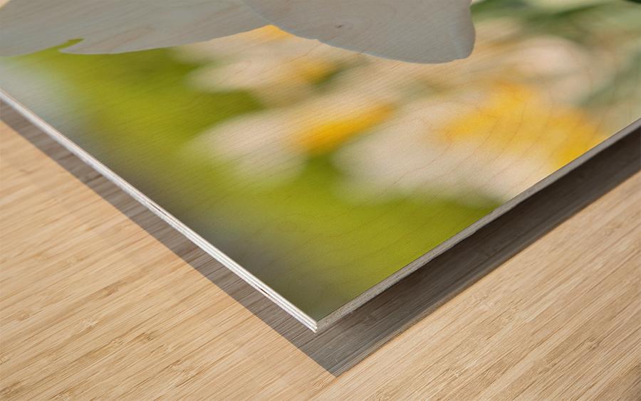 White Daffodil Photograph Wood print