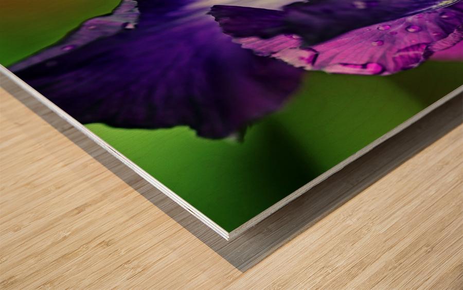 Purple With White Splash Iris Wood print