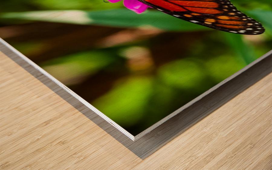 Color Clash Wood print
