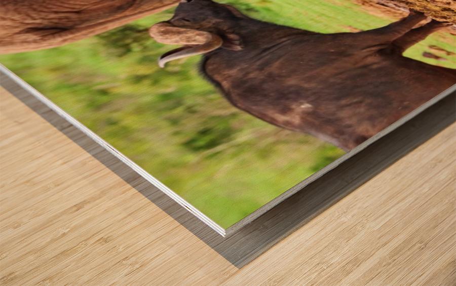Elephant Baby 582 Wood print