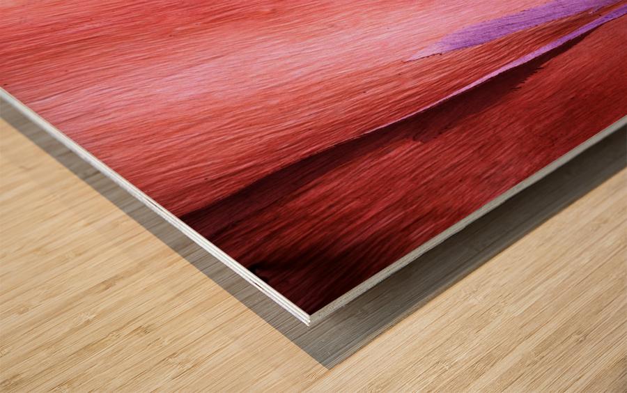 Salmon Gum Tree Bark 8 Wood print