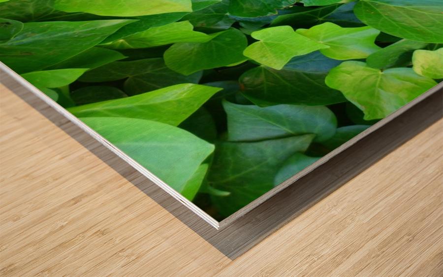 Borostyán Wood print