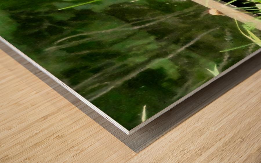 20190916_180230 Wood print