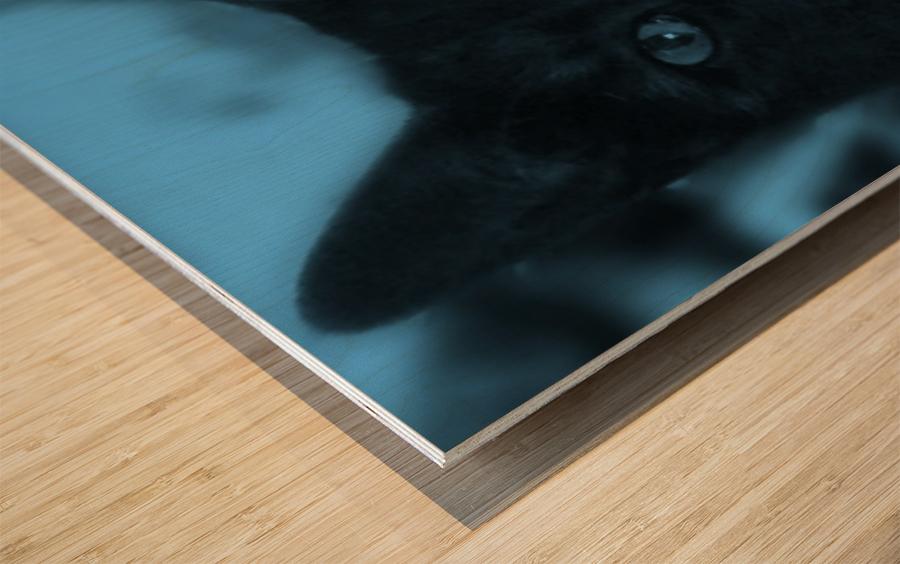 black cat in blue Wood print
