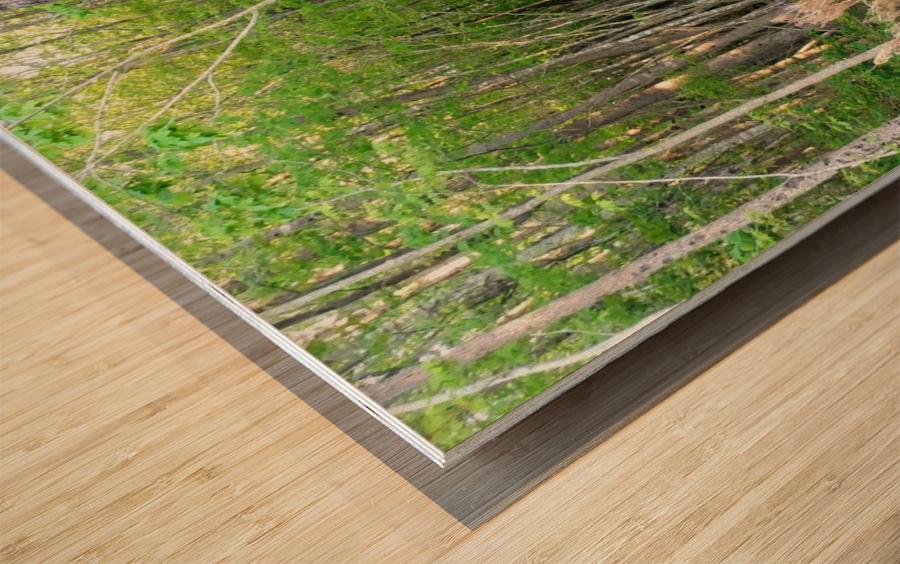Swamp in Carolina Wood print