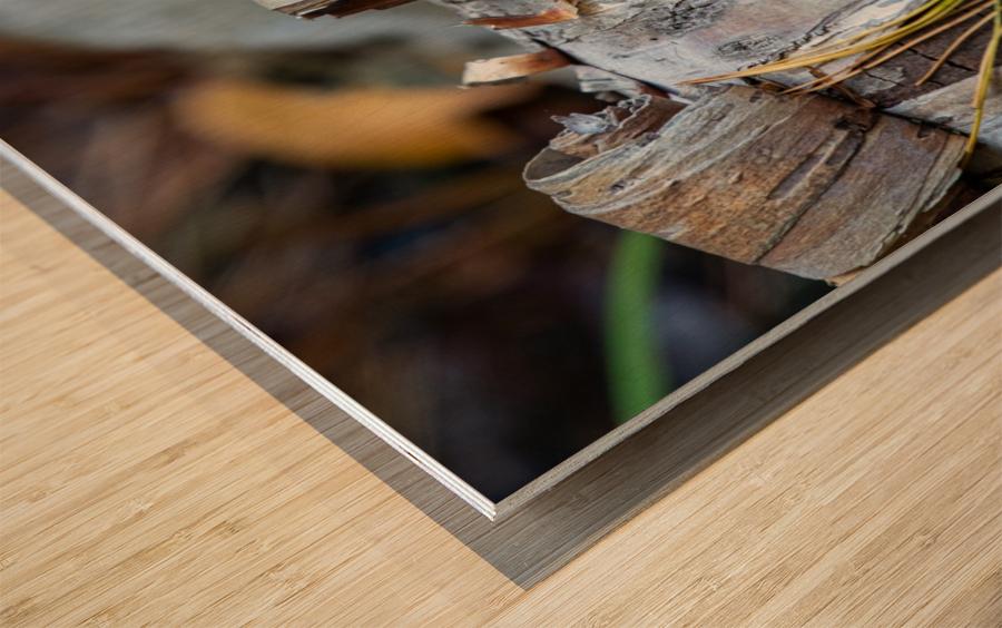 Fallen Birch Wood print