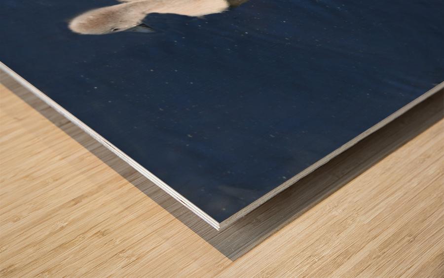 Sygnets Wood print