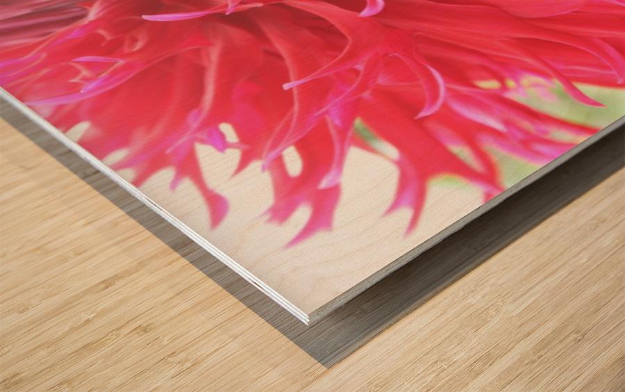 IMG_0710 Wood print