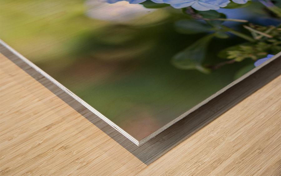 Plumbago Wood print