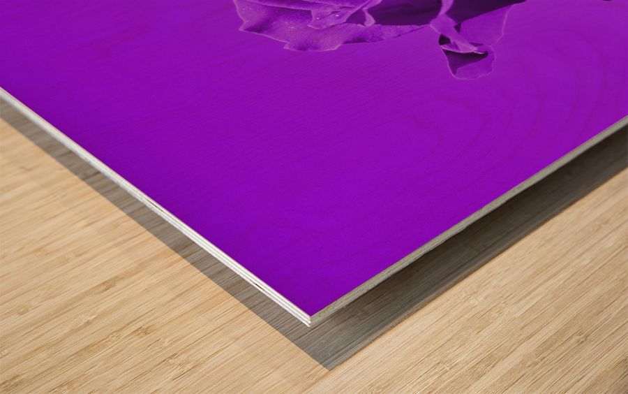 Love Rose purple 8665 Wood print
