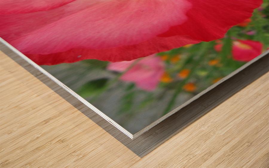 IMG_0375 Wood print