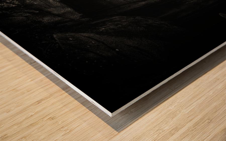 Rhino in Black & White Wood print