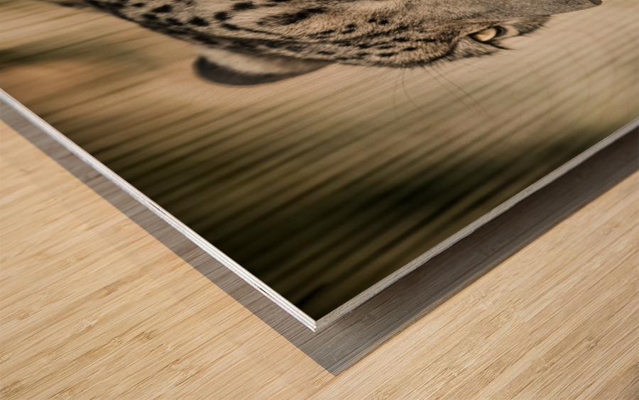 Snow Leopard Wood print