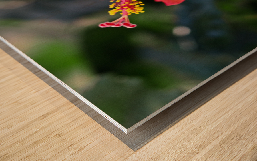 Clear Cutting Wood print