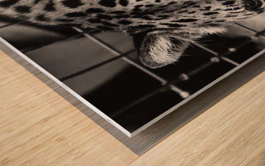 Leopard in Black & White Wood print