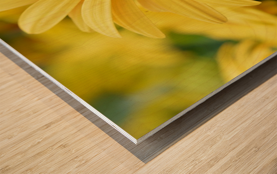 Floral Photography  Wood print