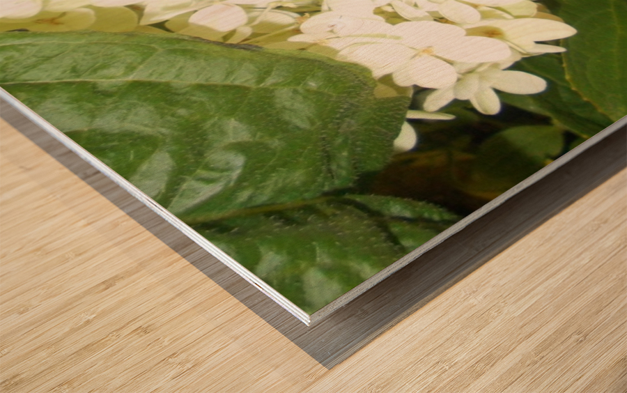 DSCN0904 Wood print