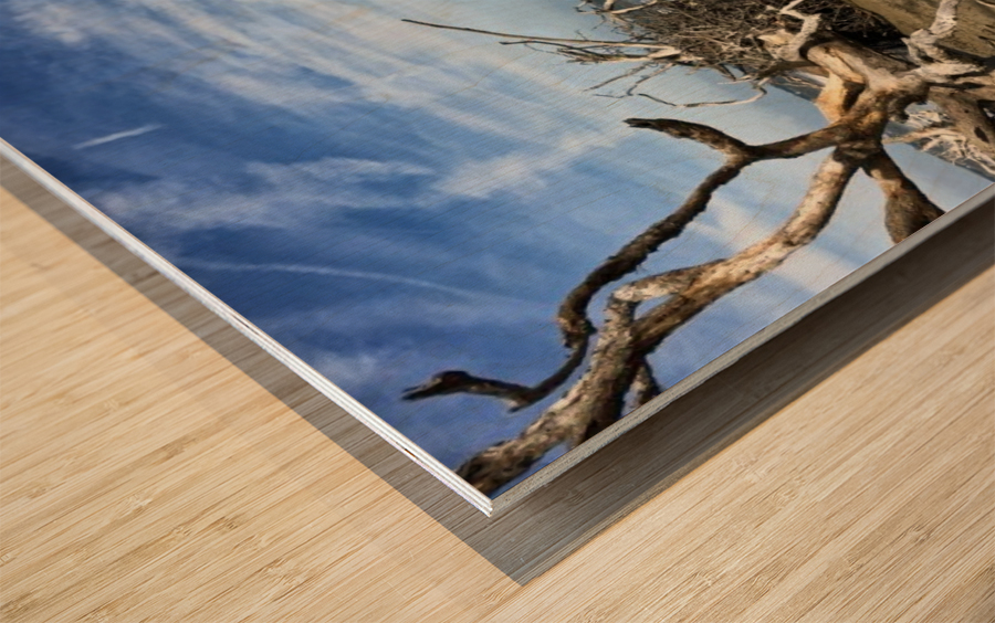 Driftwood Beach Panorama Shadows Wood print
