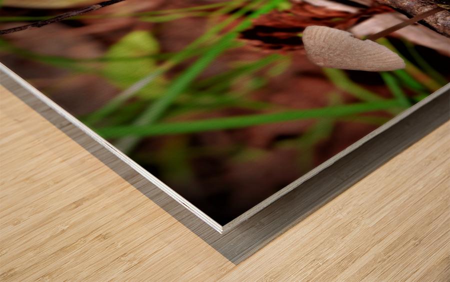 Cueillette sauvage Impression sur bois