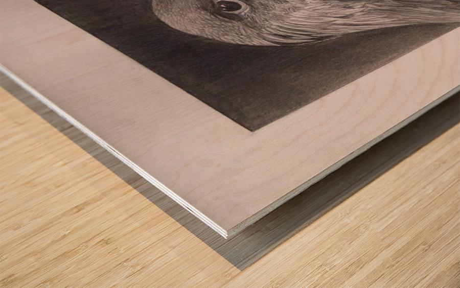 Falcon_DKS Wood print