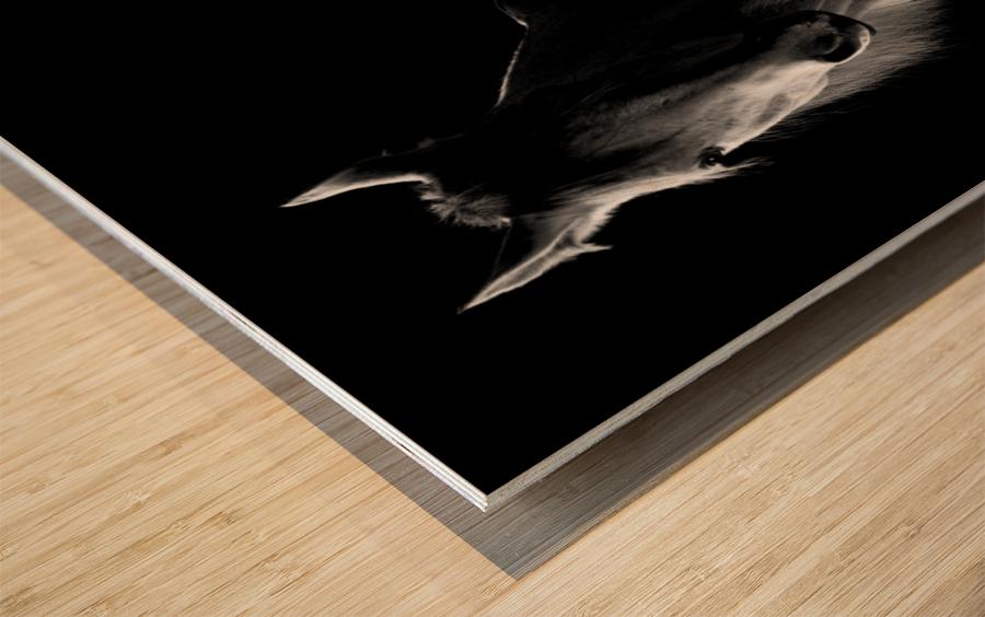 Studio Horses Wood print