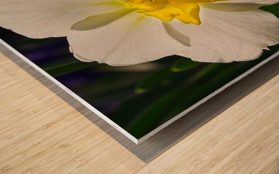 White Daffodil Wood print