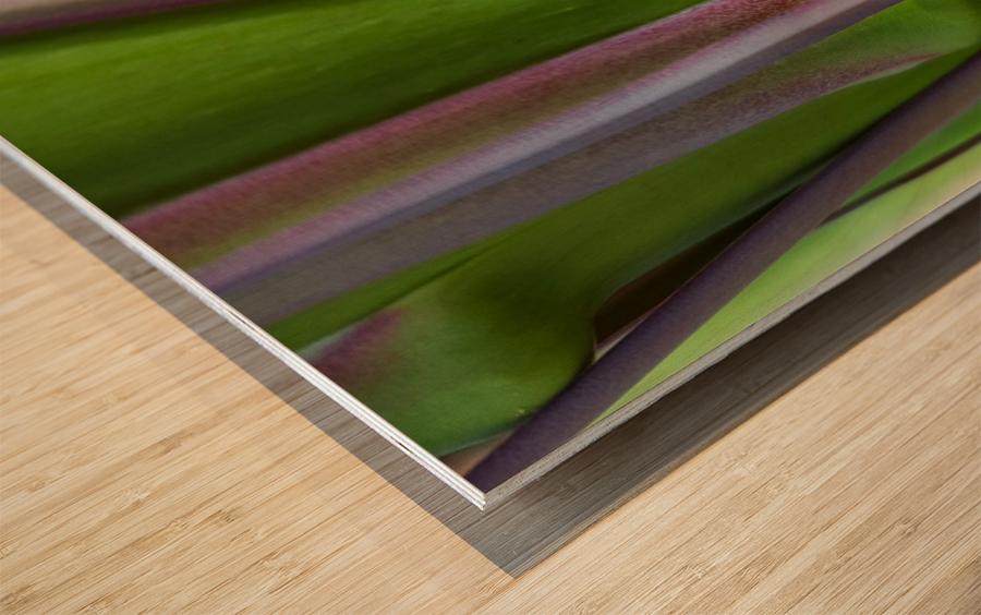 Spider Agave Stalk Wood print