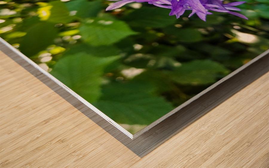 Violet flowers Wood print