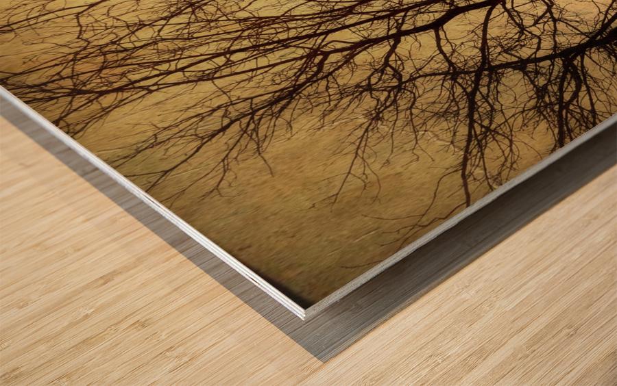 Ramifications Wood print